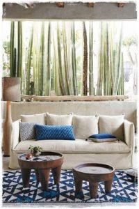 cactus y sillon