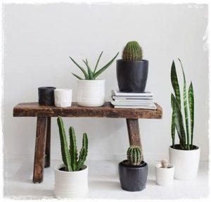 cactus_banco_madera