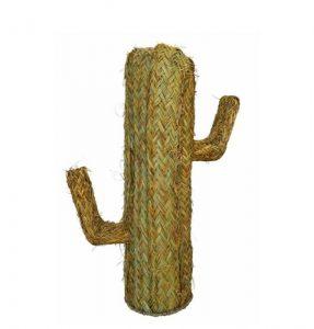 cactus_esparto_mediano_ok