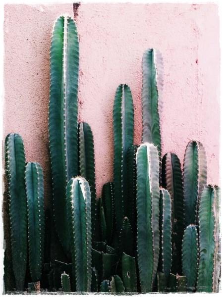 Cactus Y Colores Tendencia Dec 243 Iluminoteca