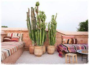 cactus_riad