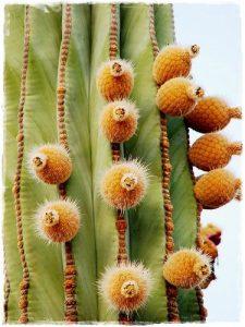 detalle_cactus