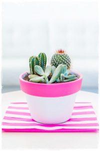 maceta_rosa_cactus