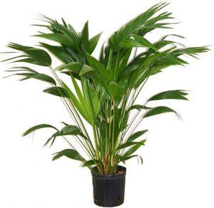 plantas_purificadora_palmera