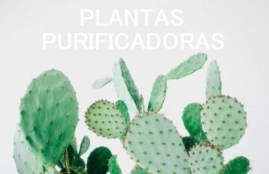 plantas_purificadoras_cactus