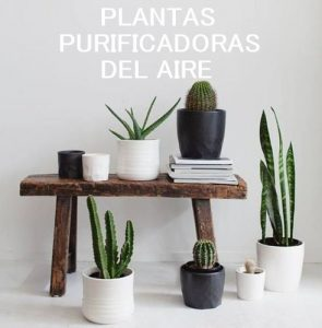 plantas_aire