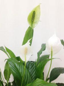 plantas_purificadoras_aire