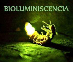 bio_luciernaga
